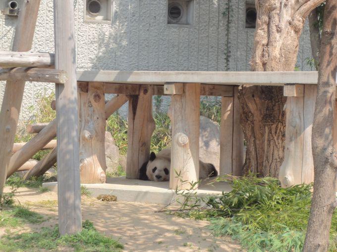 パンダとコアラは絶対見たい!