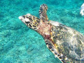ダイバー憧れの慶良間諸島へ!那覇発ボートツアーがお勧め|沖縄県|トラベルjp<たびねす>