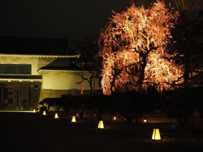 桜は約50種400本!例年4月上旬が見頃