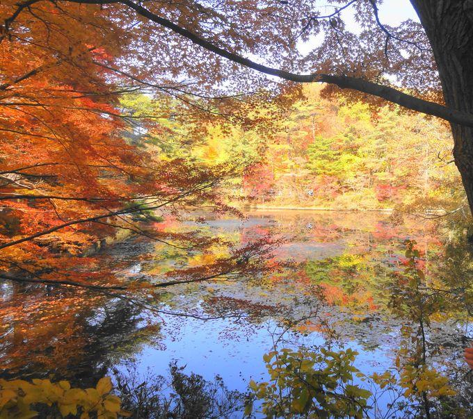子連れにオススメ!神戸市立森林植物園で絶景紅葉ハイキング
