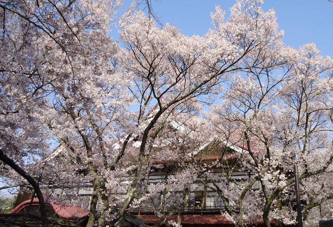 桜のための城跡