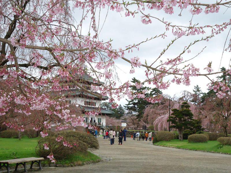 りんごの名産地だから一味違う、青森県弘前城・2600本の桜の輝き!