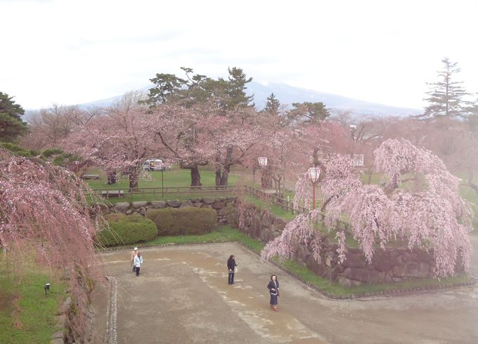 天守閣から津軽富士・岩木山と桜を眺める贅沢