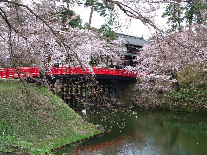 桜で埋め尽くされた弘前城を歩く