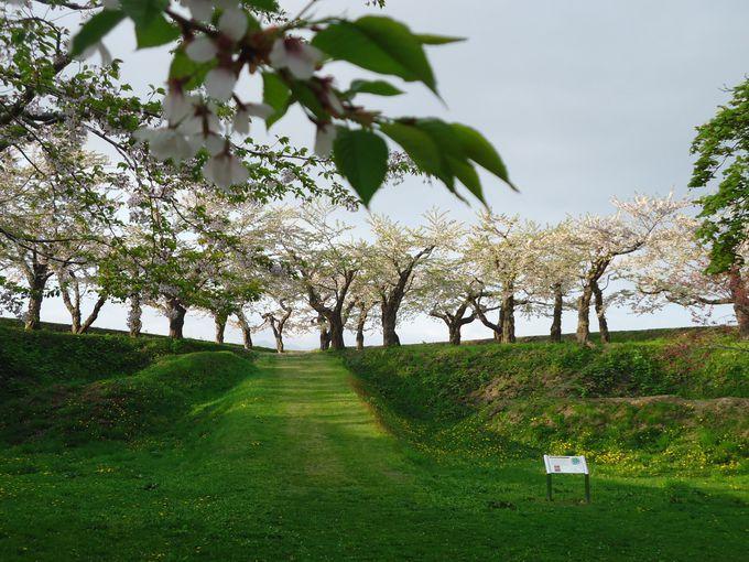 今では1600本の桜が静かに花を咲かせている