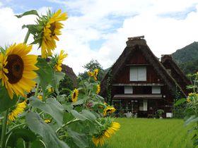 自然の豊かな色彩と合掌造りの調和が美しい、夏の白川郷|岐阜県|トラベルjp<たびねす>