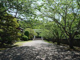 房総半島・館山の「イヤシロチ」安房神社で運気を強めよう!|千葉県|トラベルjp<たびねす>
