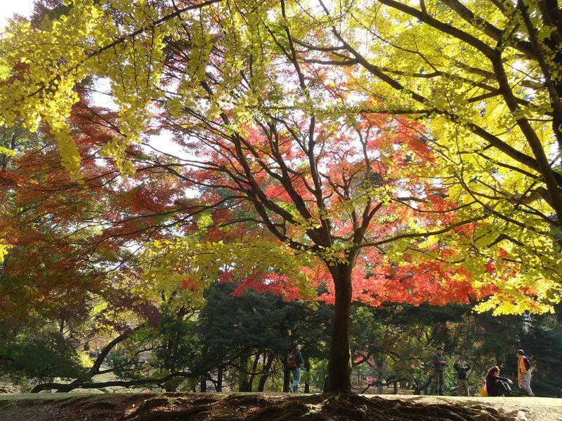 衝撃の美しさ!奈良公園で銀杏を楽しむお勧めスポット4選!