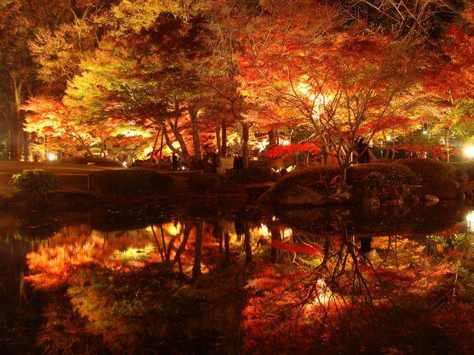 こんなに美しい紅葉が無料!荻窪の日本庭園「大田黒公園」