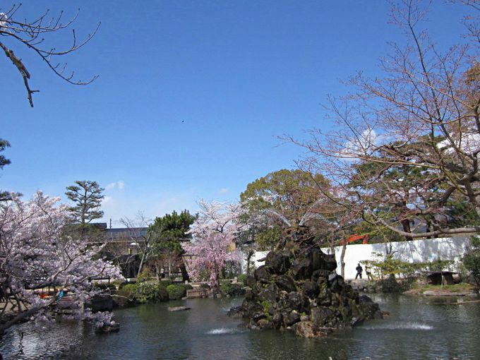 入園すると園内にも桜が!