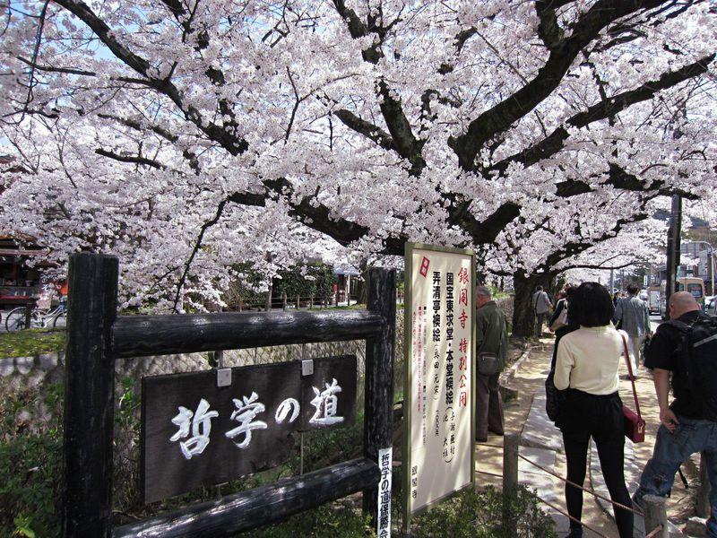 哲学の道からスタート!桜のトンネルで始まる京都お花見散歩