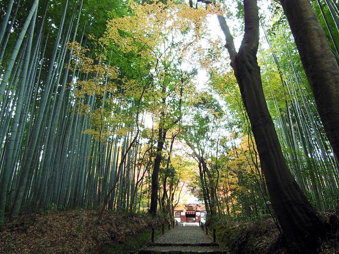 地蔵院と浄住寺は紅葉定番嵐山の穴場的スポット