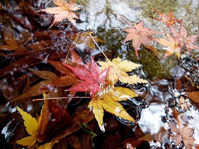 小川と紅葉の共演