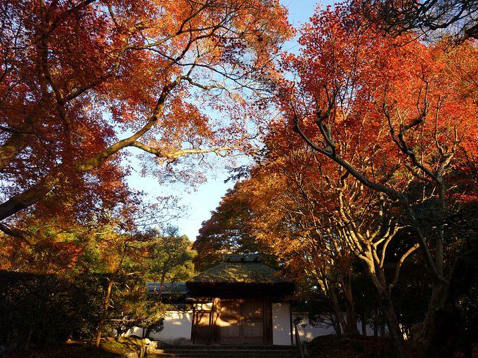 法然院と安楽寺