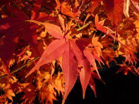 午後が断然オススメ!真っ赤に燃え立つ京都・哲学の道の紅葉|京都府|トラベルjp<たびねす>