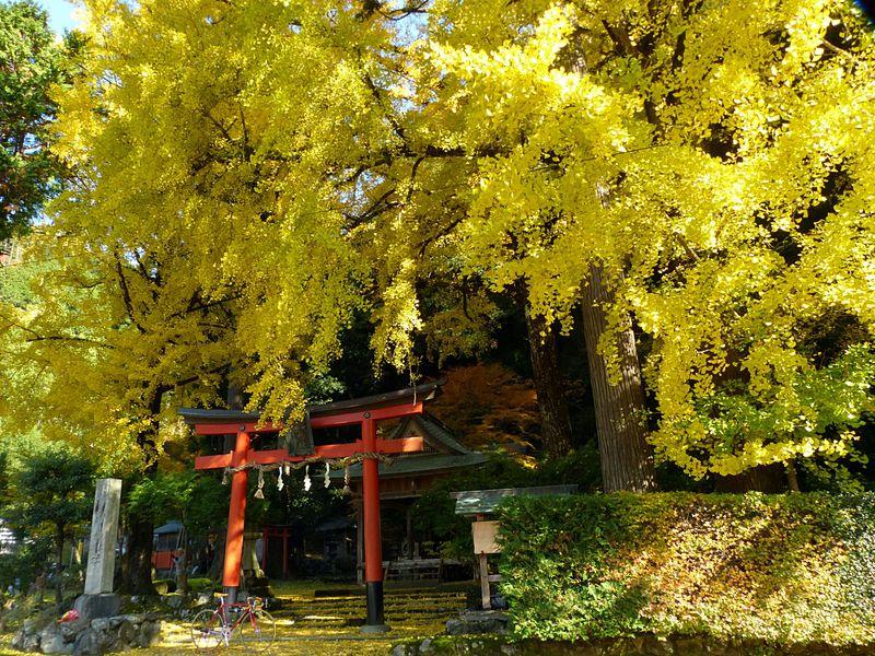 紅葉だけが秋じゃない!京都が黄金色になるイチョウ黄葉5選