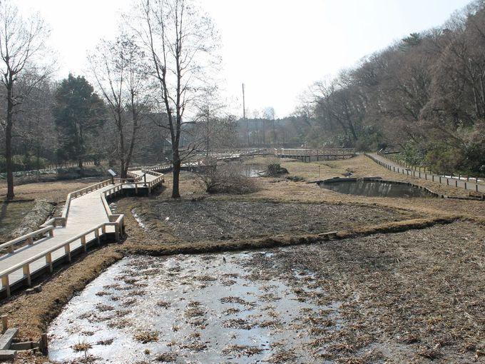 癒しの湿地帯 『水生植物園』散策
