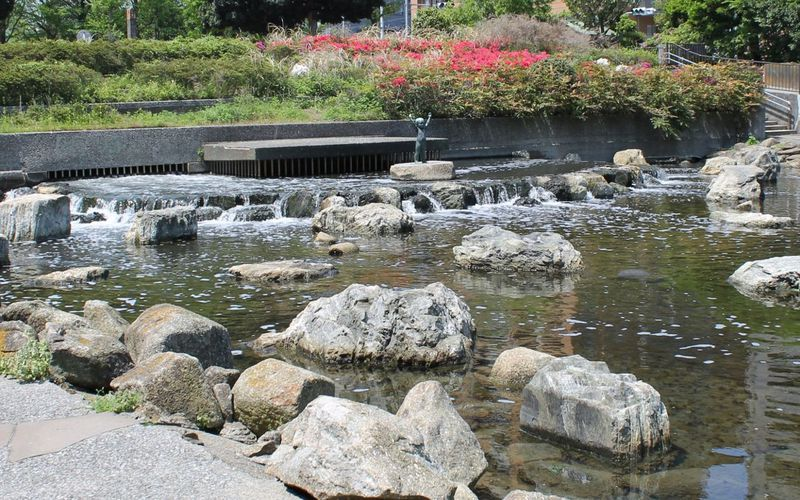 植物&鳥たち〜最古の民家〜ガマの池!江東区・仙台堀川公園