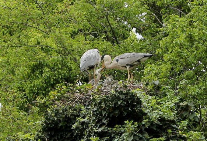 鳥たちの楽園!川に浮かぶ野鳥の島