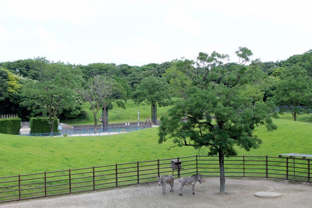 都心からわずか50分!広大な自然に包まれた千葉市動物公園