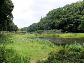尾瀬のような風景も!市川市「大町公園」は動物園やアスレチックなど見どころ満点|千葉県|トラベルjp<たびねす>