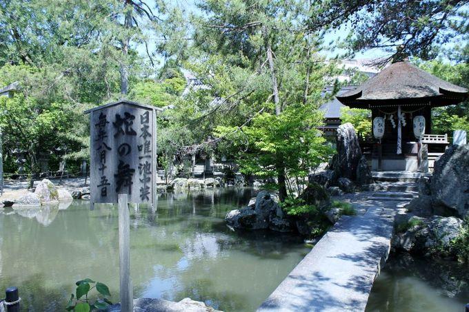 1000年の歴史が刻まれた長浜の氏神様「長浜八幡宮」