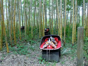 郷愁を誘う!千葉・勝浦「花野辺の里」四季の植物から雛人形まで|千葉県|トラベルjp<たびねす>