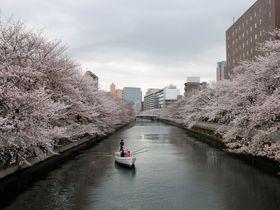 水辺の町並みが美しい!江東区おすすめお花見スポット4選|東京都|トラベルjp<たびねす>