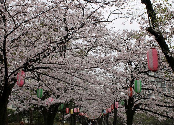 全長900メートルもの桜並木が壮観!『仙台堀川公園』