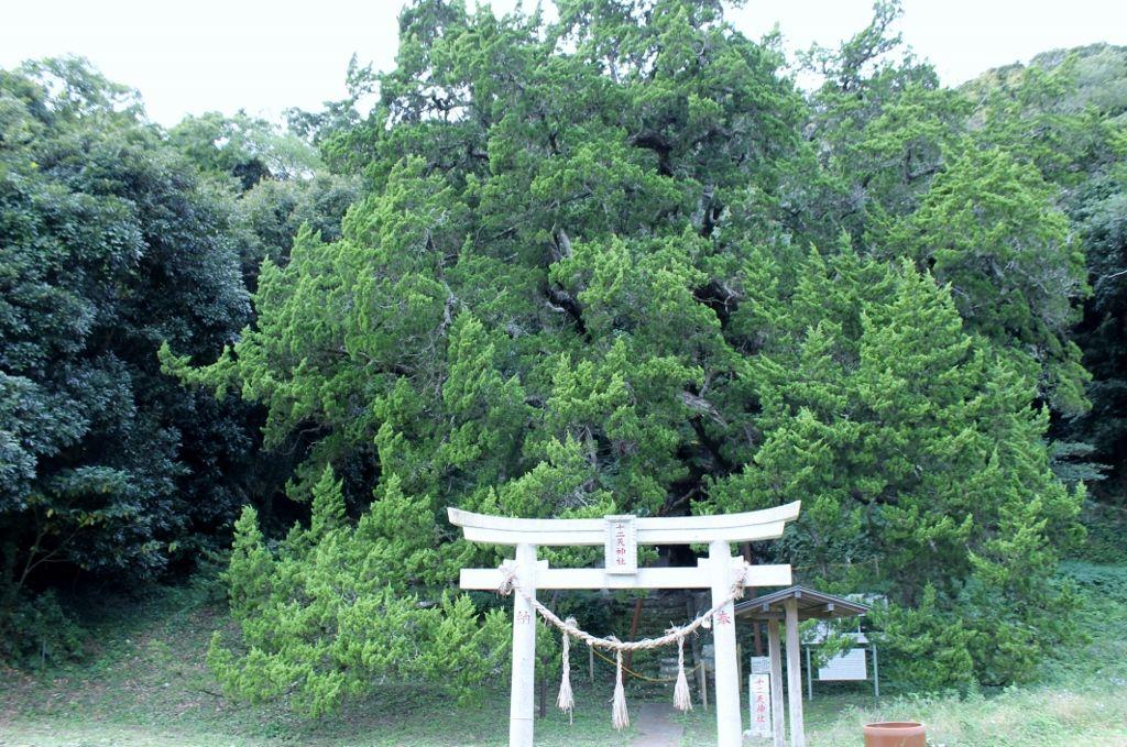 館山市天然記念物「沼のびゃくしん」