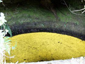 千葉・館山「城山公園」&「周辺穴場スポット」まるごと散策|千葉県|トラベルjp<たびねす>