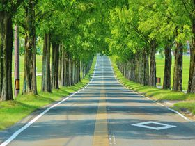 滋賀・マキノ高原のメタセコイア並木道は美しすぎる感動ドライブルート!