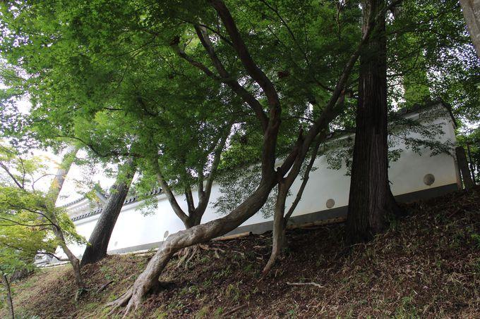 日本最後の城!園部城