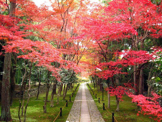 静寂の参道を飾る紅葉・鹿王院