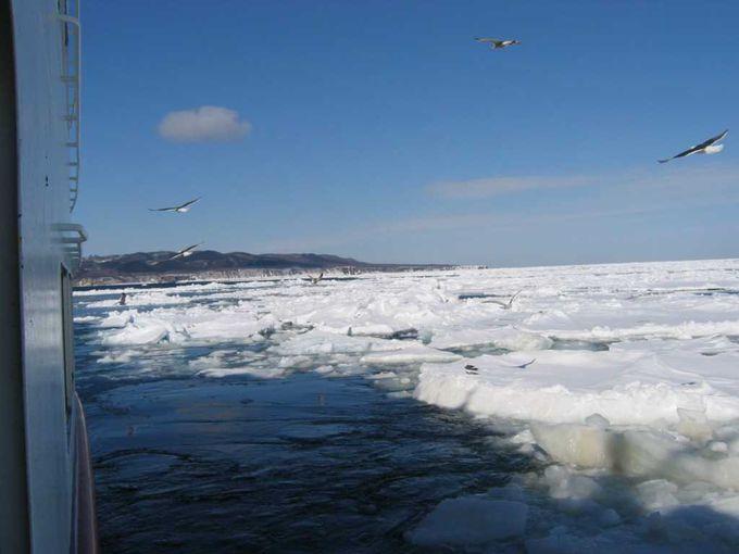 砕氷船に乗って、流氷の海へ