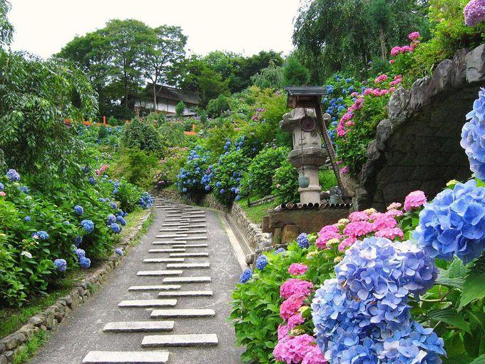 1万株のあじさいが山肌を埋め尽くす!「善峯寺」(京都)