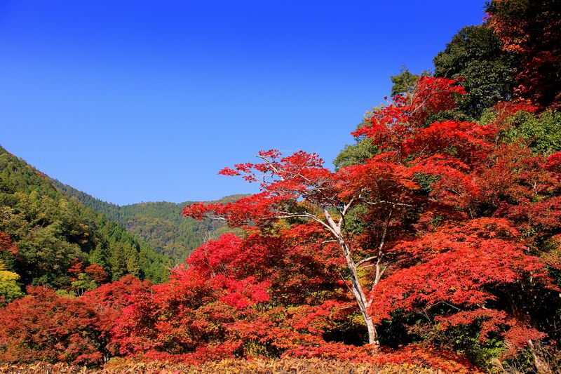 1日100人限定!誰も知らない京都の紅葉穴場!〜洛北・白龍園