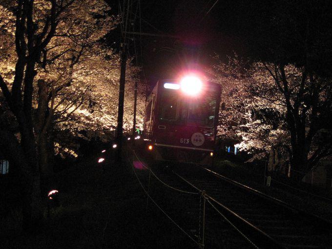 乗れば感動も倍増!「夜桜電車」