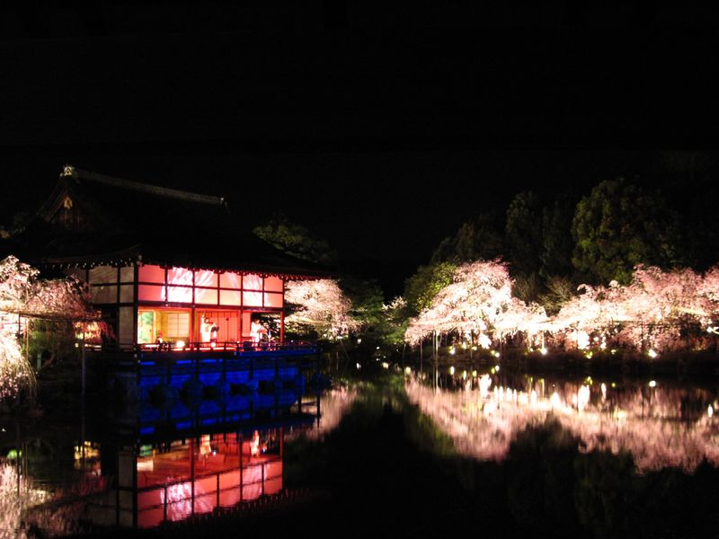 幽玄なり!夜桜と音楽の饗宴!「平安神宮紅しだれコンサート」