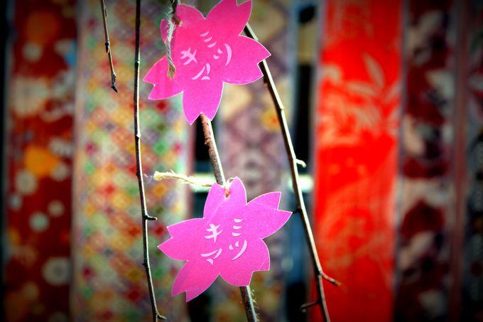 「キミマツサクラ」が震災復興を見守る!(京都市・嵐山)