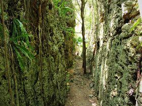 裂ける大地!「バリバリ岩」は地殻変動体感ゾーン!〜南大東島