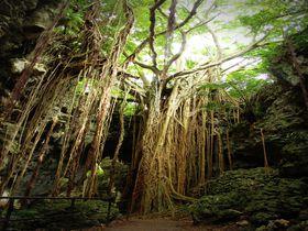 「ガンガラーの谷」で圧倒的存在感のウフシュガジュマルに会おう!沖縄