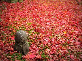 京都「圓光寺(えんこうじ)」の散りもみじが美しすぎて言葉を失う!