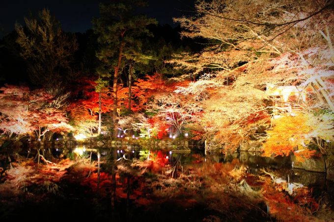 いざ『祈りの世界』へ!京都の紅葉ライトアップ「醍醐寺」