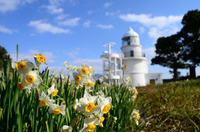 スイセンの名所でもある「樫野崎灯台」