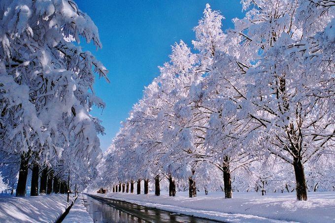 春夏秋冬いつ観光しても感動必至「メタセコイア並木道」