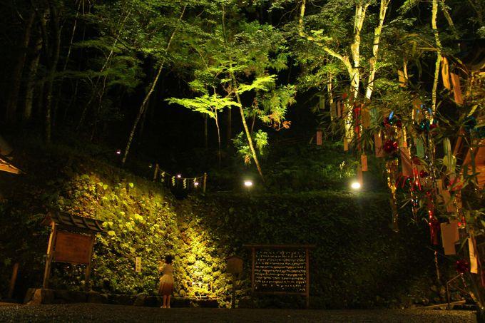 「七夕笹飾りライトアップ」の拝観内容は日中と同じ!