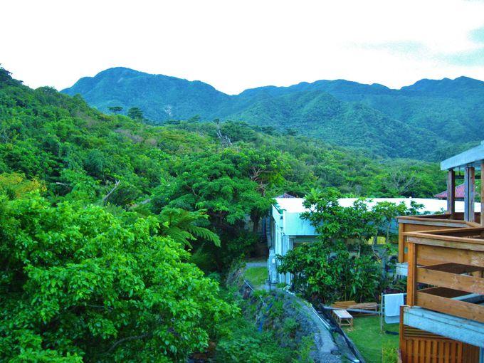 日本唯一?「ジャングルビュー」を楽しめるホテル!