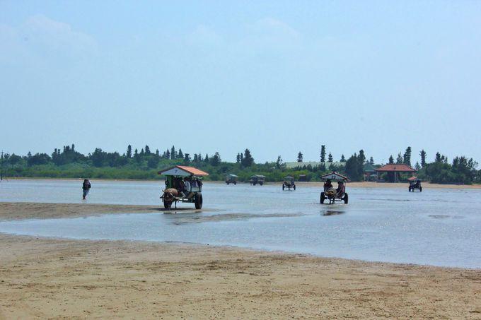 遠浅の海を渡る水牛車の列