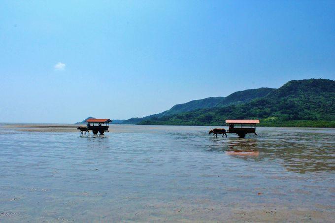 【楽しみ方4】水牛車に乗って亜熱帯植物茂る由布島へ
